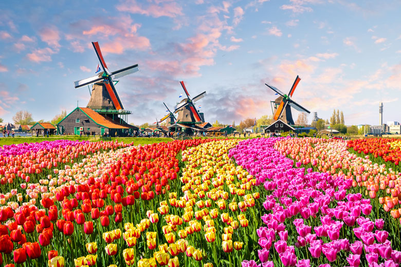 Tulpenblüte Holland